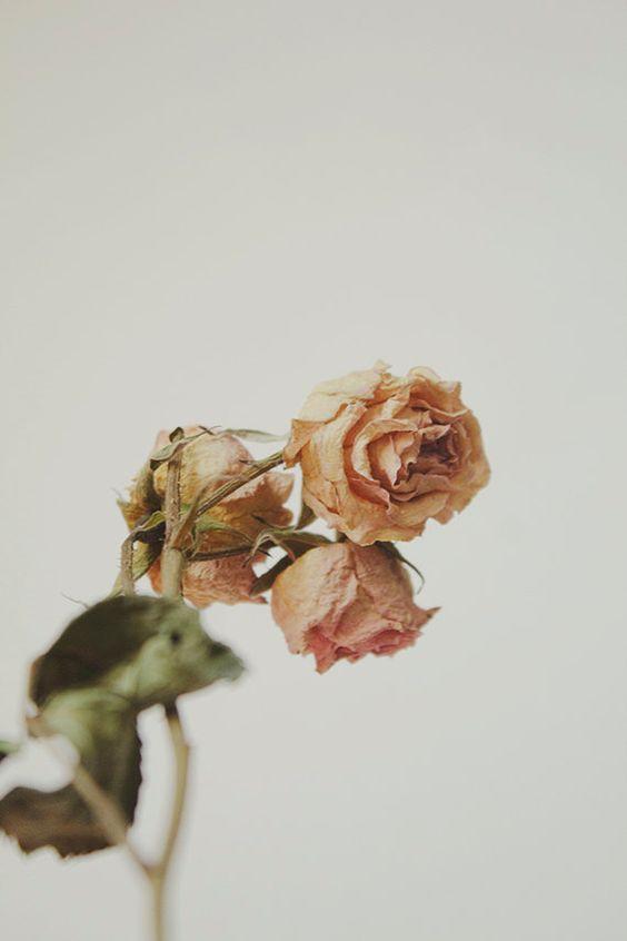 9cf442104a60a02989546b48fbe5d3f9 彷彿來到法國鄉村~復古乾燥玫瑰的經典 Shabby Chic風格