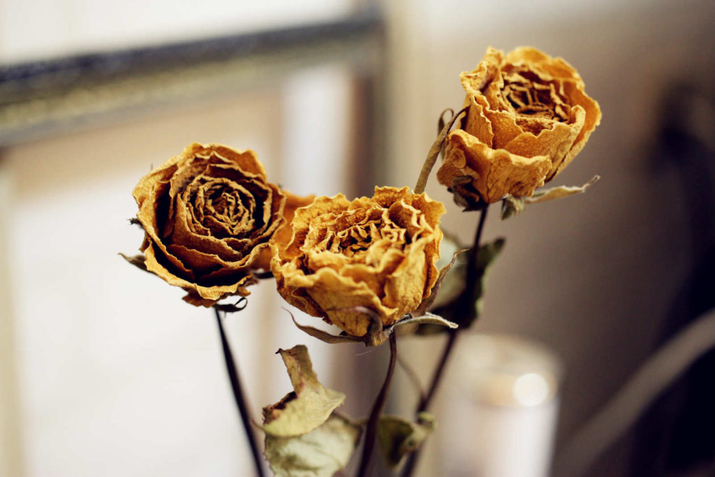 IMG 2597 meitu 3 1024x683 彷彿來到法國鄉村~復古乾燥玫瑰的經典 Shabby Chic風格