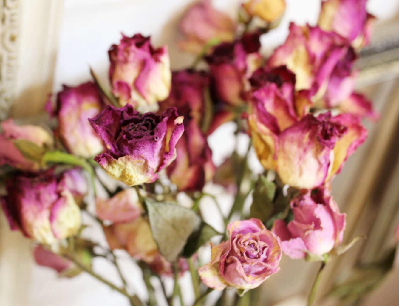 進口手工乾燥漸層玫瑰