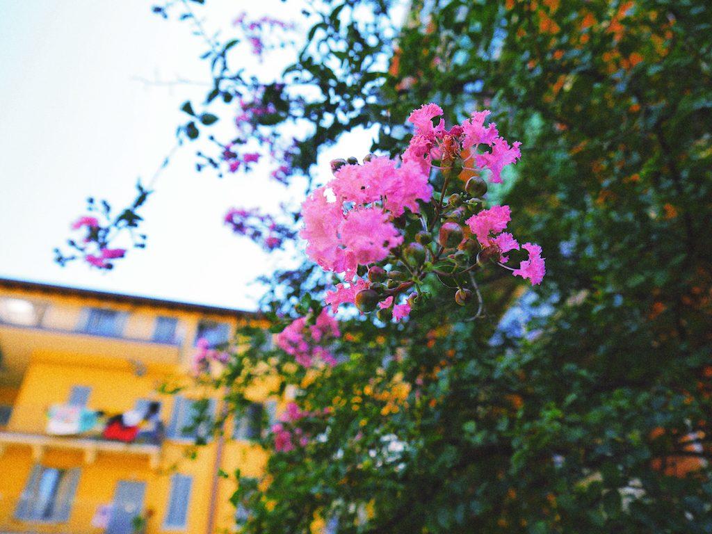 IMG 3932 1024x768 從翡冷翠到斯佩洛,我走遍了那些開滿花的地方