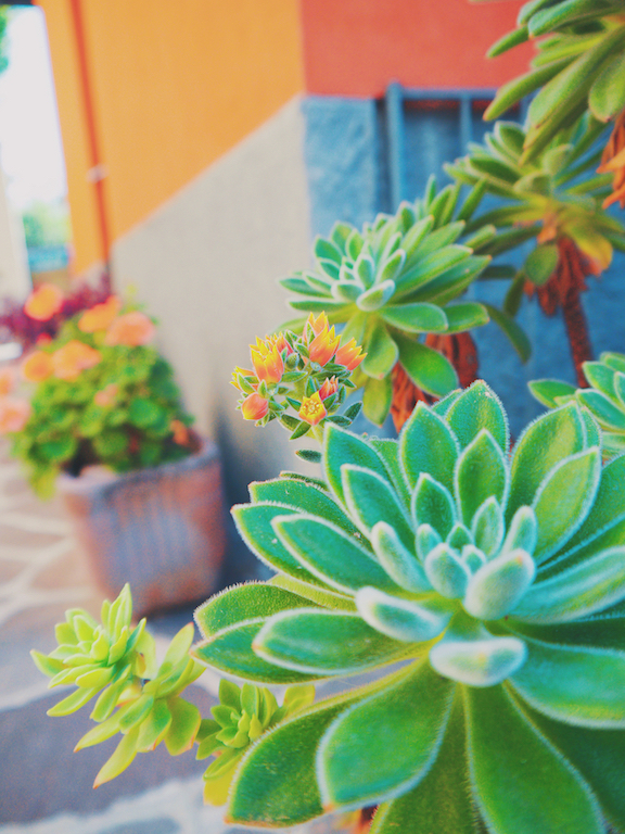 IMG 3933 從翡冷翠到斯佩洛,我走遍了那些開滿花的地方