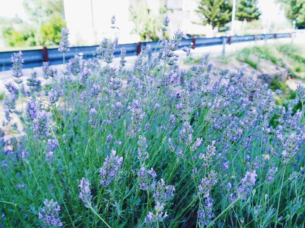 IMG 3935 1024x768 從翡冷翠到斯佩洛,我走遍了那些開滿花的地方