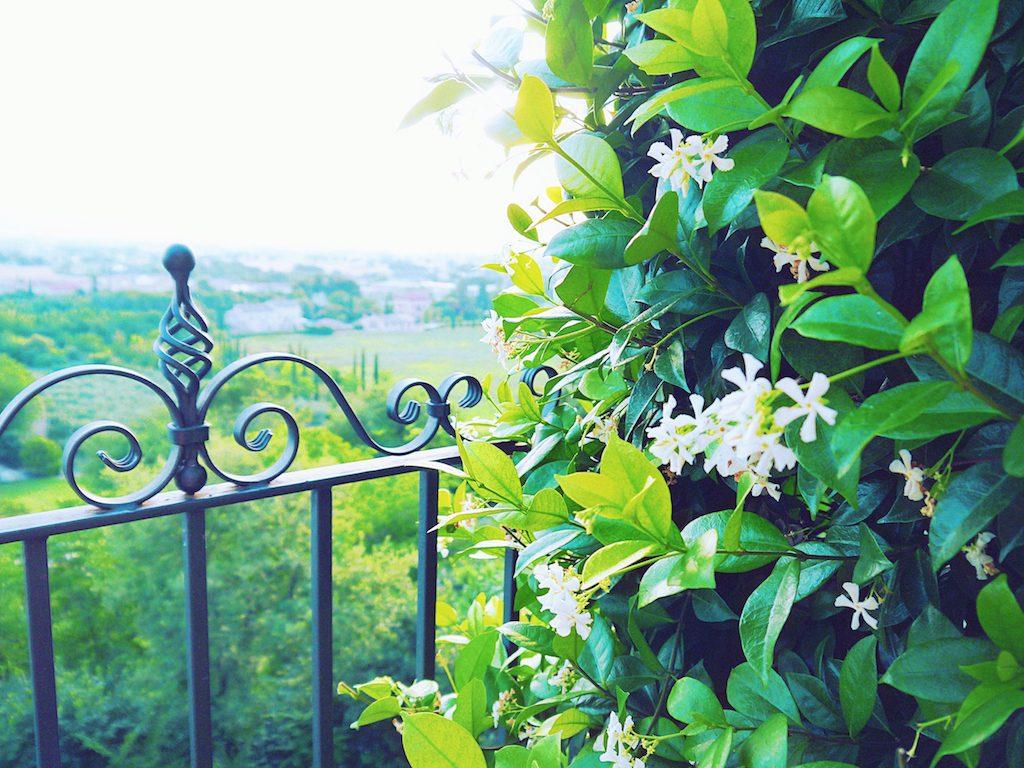 IMG 3936 1024x768 從翡冷翠到斯佩洛,我走遍了那些開滿花的地方