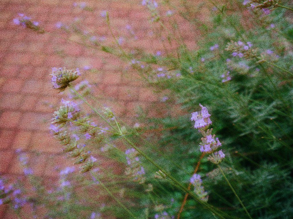IMG 3939 1024x768 從翡冷翠到斯佩洛,我走遍了那些開滿花的地方