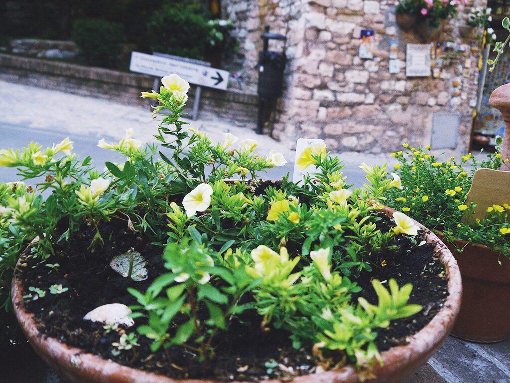 IMG 7237 1024x768 從翡冷翠到斯佩洛,我走遍了那些開滿花的地方