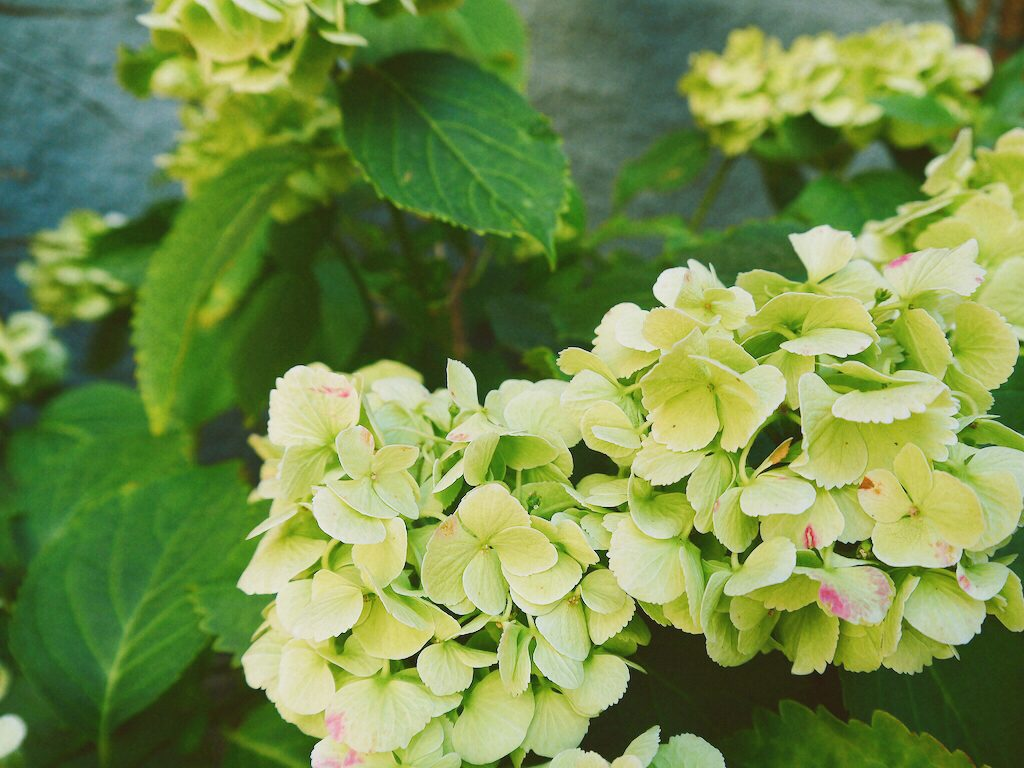 IMG 7239 1024x768 從翡冷翠到斯佩洛,我走遍了那些開滿花的地方
