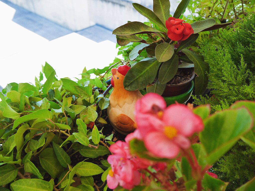 IMG 7240 1024x768 從翡冷翠到斯佩洛,我走遍了那些開滿花的地方