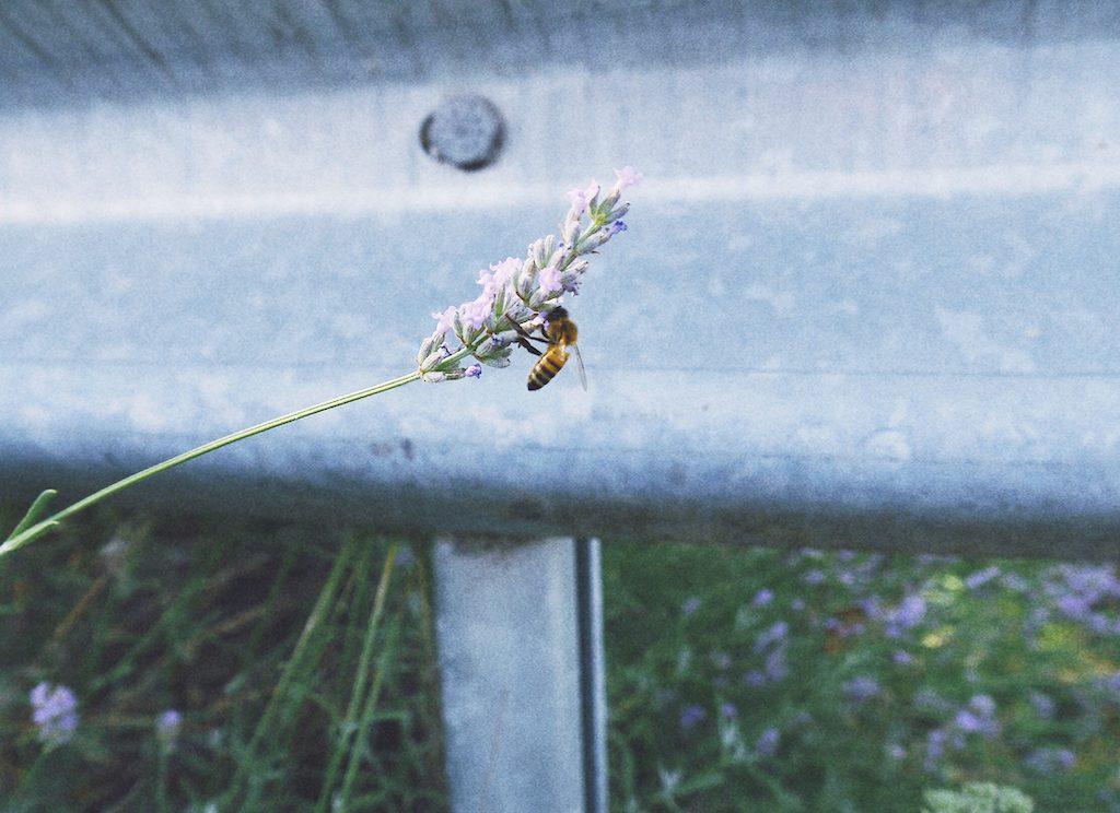 IMG 7243 1024x744 從翡冷翠到斯佩洛,我走遍了那些開滿花的地方
