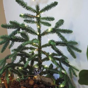 麋鹿聖誕森林