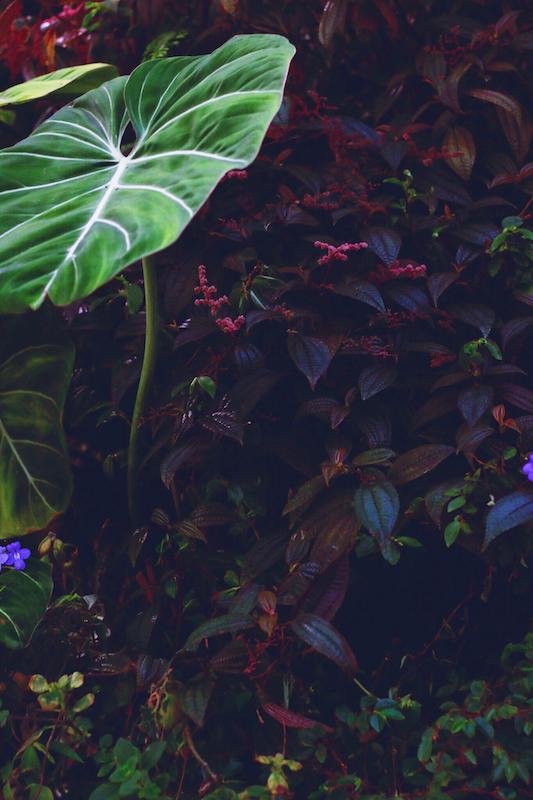 IMG 7815 夢想著有個巨大的溫室 🌿  新加坡濱海灣花園