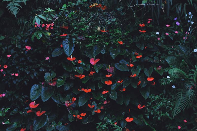 夢想著有個巨大的溫室 🌿 新加坡濱海灣花園