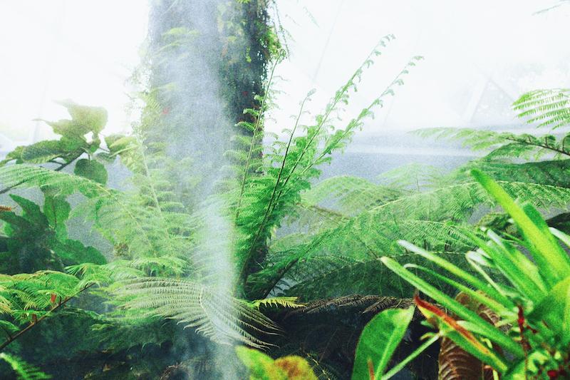 IMG 7820 夢想著有個巨大的溫室 🌿  新加坡濱海灣花園