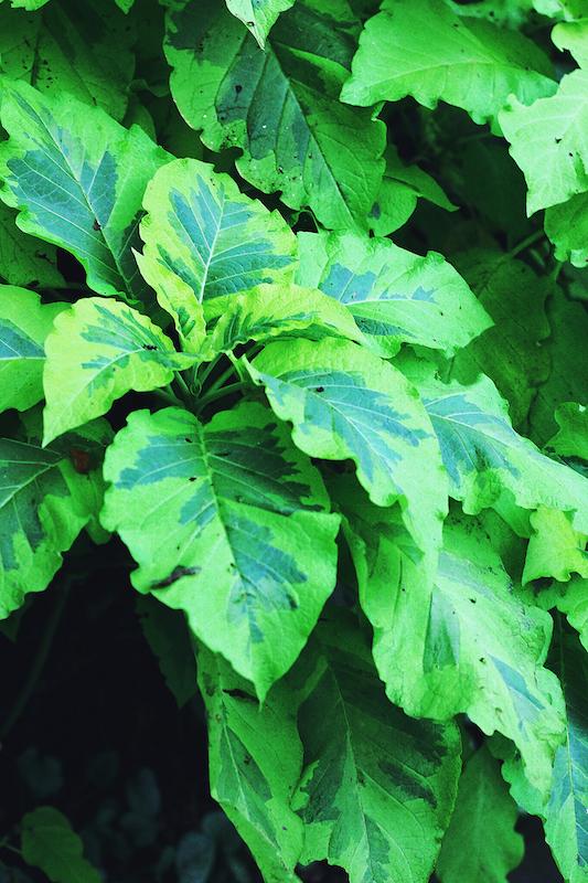 IMG 7821 夢想著有個巨大的溫室 🌿  新加坡濱海灣花園