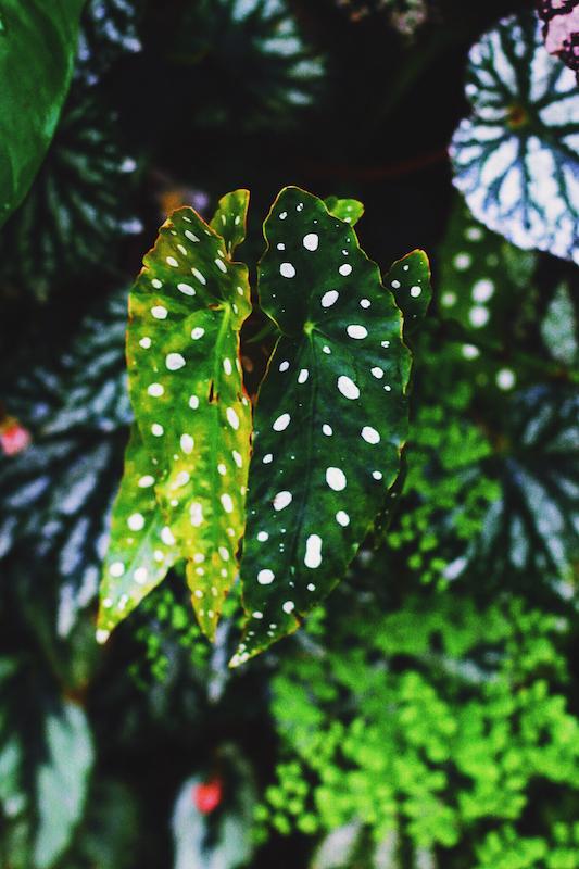 IMG 7822 夢想著有個巨大的溫室 🌿  新加坡濱海灣花園