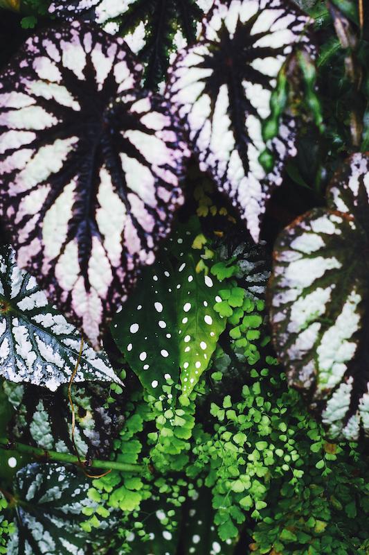 IMG 7823 夢想著有個巨大的溫室 🌿  新加坡濱海灣花園