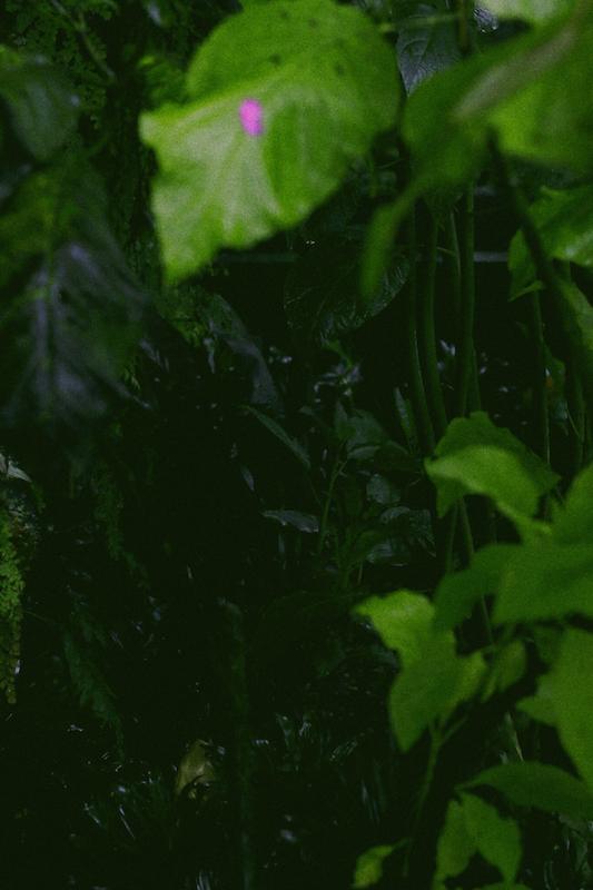 IMG 7829 夢想著有個巨大的溫室 🌿  新加坡濱海灣花園