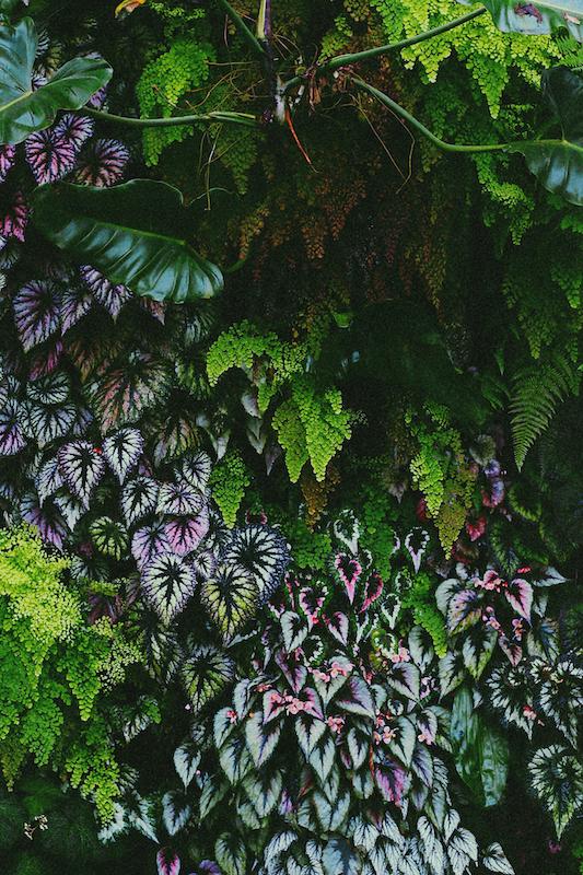 IMG 7831 夢想著有個巨大的溫室 🌿  新加坡濱海灣花園