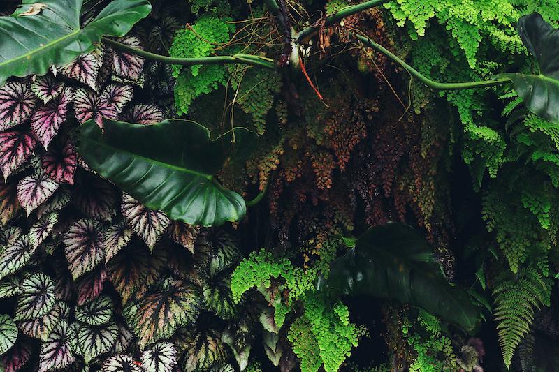 IMG 7832 夢想著有個巨大的溫室 🌿  新加坡濱海灣花園