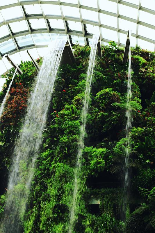 IMG 7833 夢想著有個巨大的溫室 🌿  新加坡濱海灣花園
