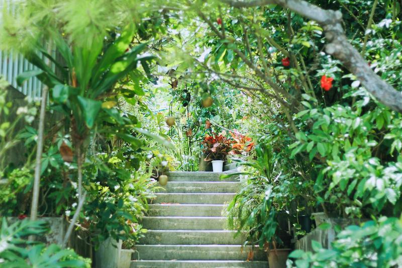 夏日琉球島嶼 / 讓人捨不得離開的沖繩花草秘境