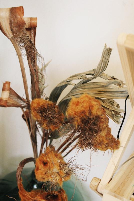 IMG 6587 醜得很可愛!有著奇特的外觀和觸感的台灣特有種蕨類:金狗毛