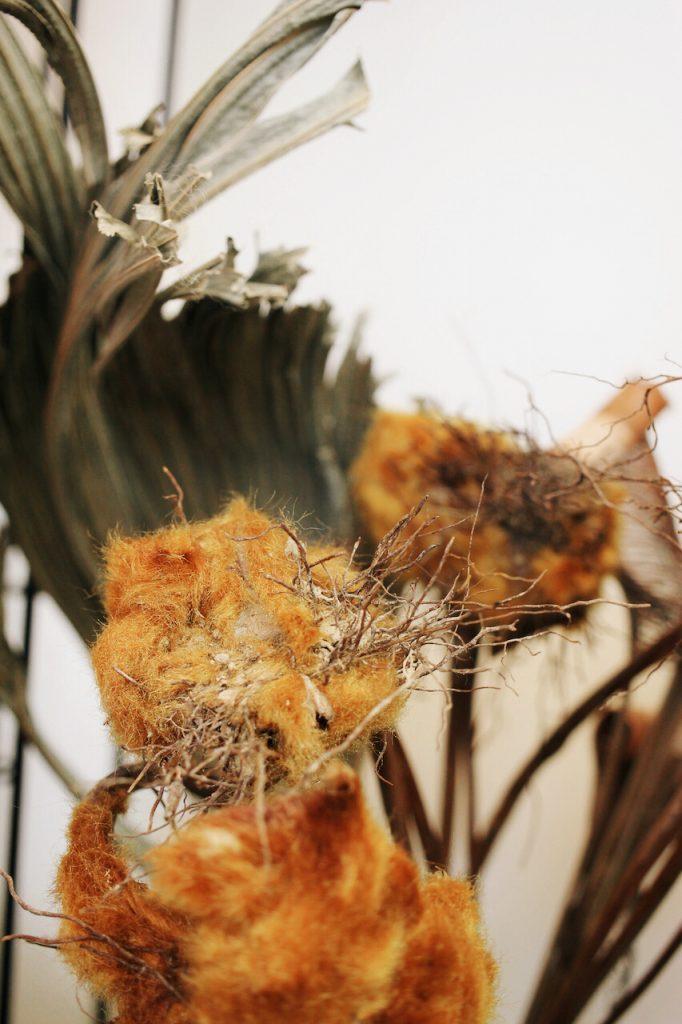 IMG 6589 682x1024 醜得很可愛!有著奇特的外觀和觸感的台灣特有種蕨類:金狗毛