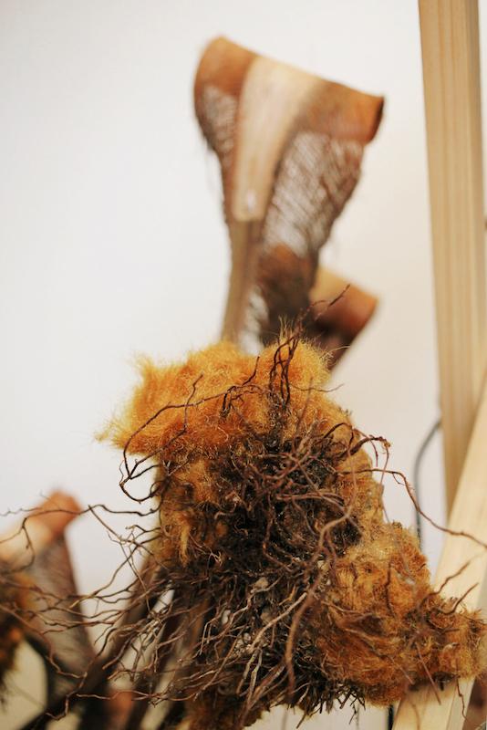 IMG 6592 醜得很可愛!有著奇特的外觀和觸感的台灣特有種蕨類:金狗毛