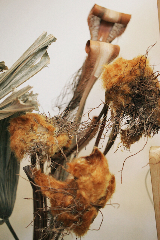 IMG 6596 醜得很可愛!有著奇特的外觀和觸感的台灣特有種蕨類:金狗毛