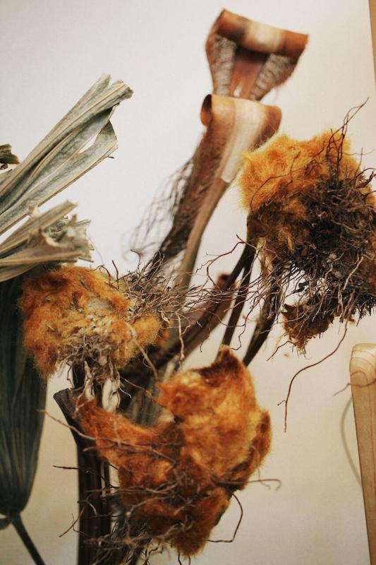 IMG 6598 醜得很可愛!有著奇特的外觀和觸感的台灣特有種蕨類:金狗毛