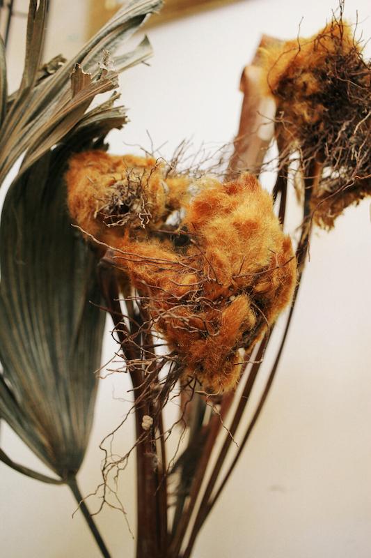 IMG 6601 醜得很可愛!有著奇特的外觀和觸感的台灣特有種蕨類:金狗毛