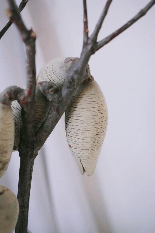 IMG 6782 來自澳洲少見的天然果實:木梨果