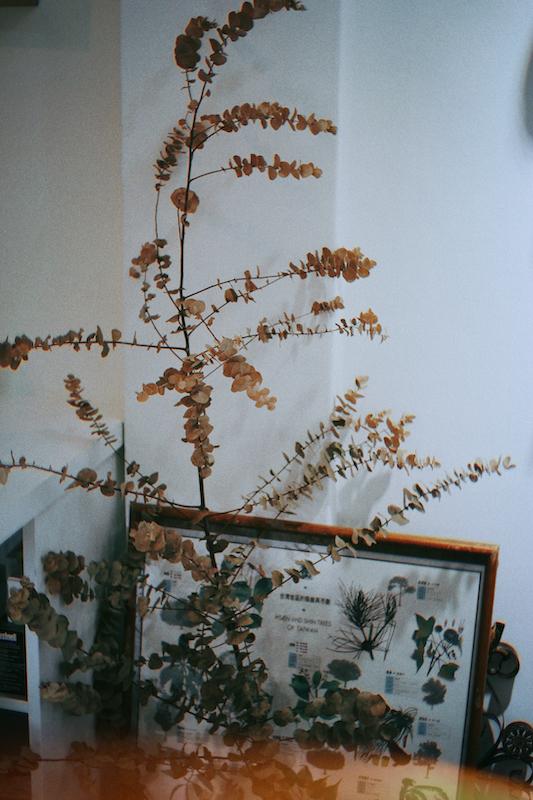IMG 1029 來自觀音山種植,有著狂野姿態的台灣佛塔