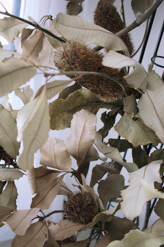 IMG 1071 來自觀音山種植,有著狂野姿態的台灣佛塔