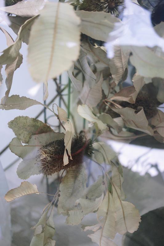 IMG 1072 來自觀音山種植,有著狂野姿態的台灣佛塔