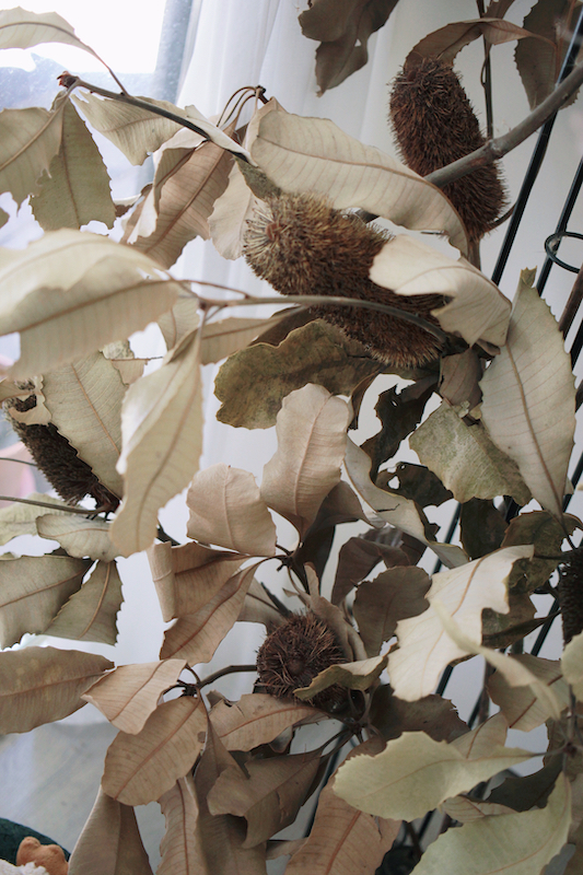 IMG 1075 來自觀音山種植,有著狂野姿態的台灣佛塔
