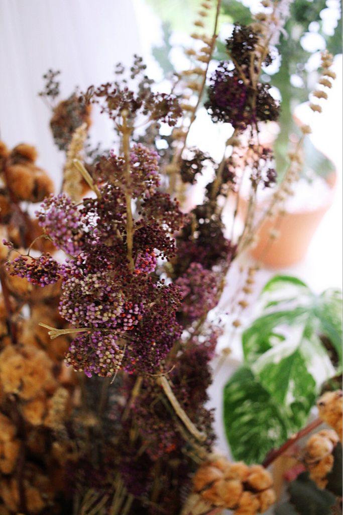 IMG 9927 683x1024 鮮花紫與乾燥酒紅,讓人無法不被吸引的濃郁色系:台灣特有種紫仁丹