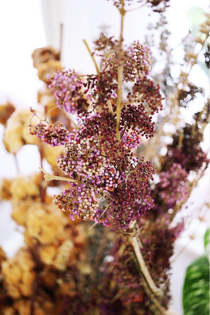 IMG 9928 683x1024 鮮花紫與乾燥酒紅,讓人無法不被吸引的濃郁色系:台灣特有種紫仁丹