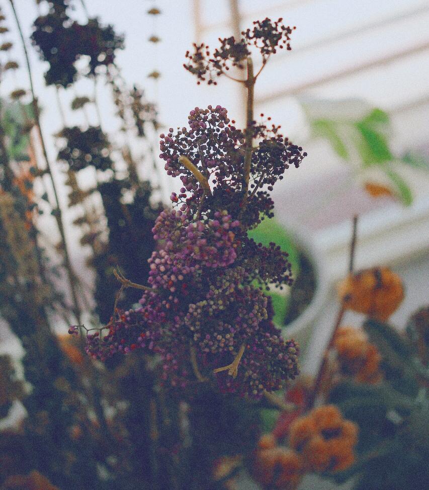IMG 9929 鮮花紫與乾燥酒紅,讓人無法不被吸引的濃郁色系:台灣特有種紫仁丹
