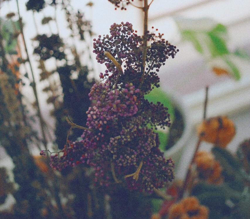 鮮花的紫與乾燥的酒紅,讓人無法不被吸引濃郁色系:紫仁丹