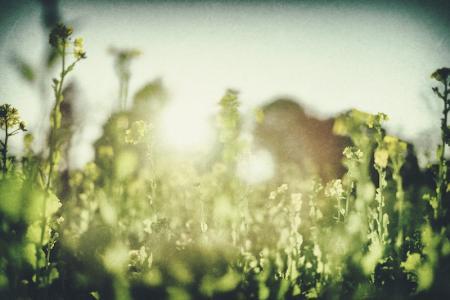 森林感大份量外拍花束